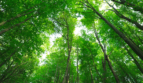 Who We Are What We Do Thumbnail New